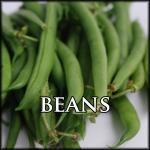 Beans Text Border