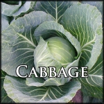 Cabbage Base Text Border
