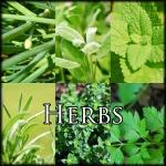 HerbsEdit