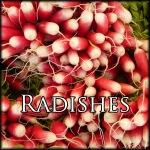RadishesEdit