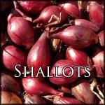 ShallotsEdit
