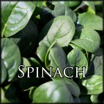 SpinachEdit