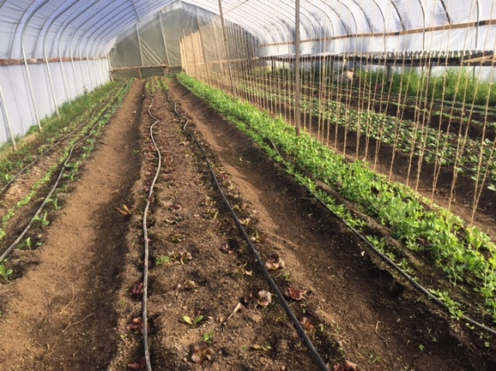 March hoop house 2016